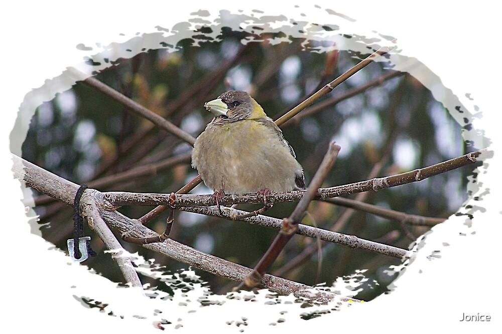 Bird In The Tree by Jonice
