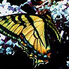 Yellow Wings by MaeBelle