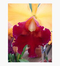 Luscious Lips - Cattleya Photographic Print