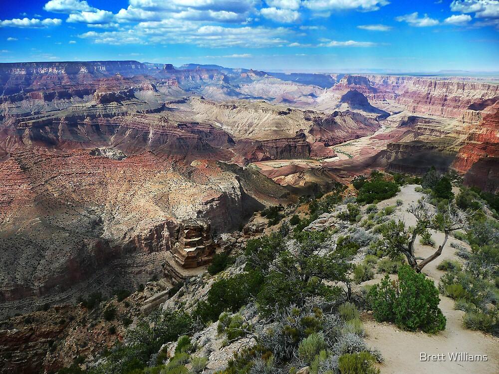 Desert View by Brett Williams