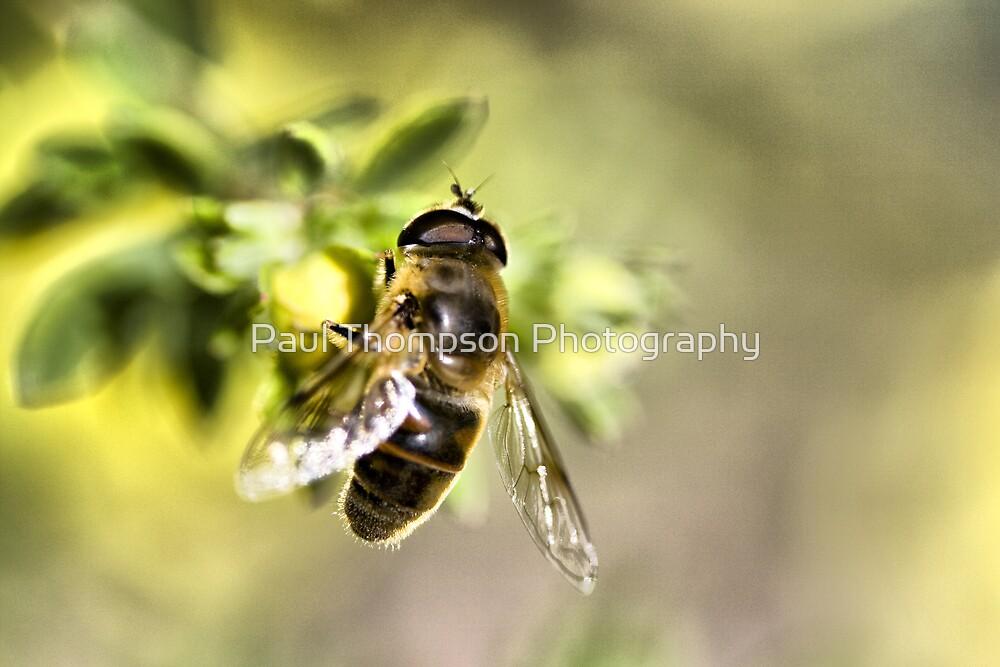 Honey by Paul Thompson Photography