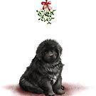 Newfie puppy under the mistletoe by Patricia Reeder Eubank