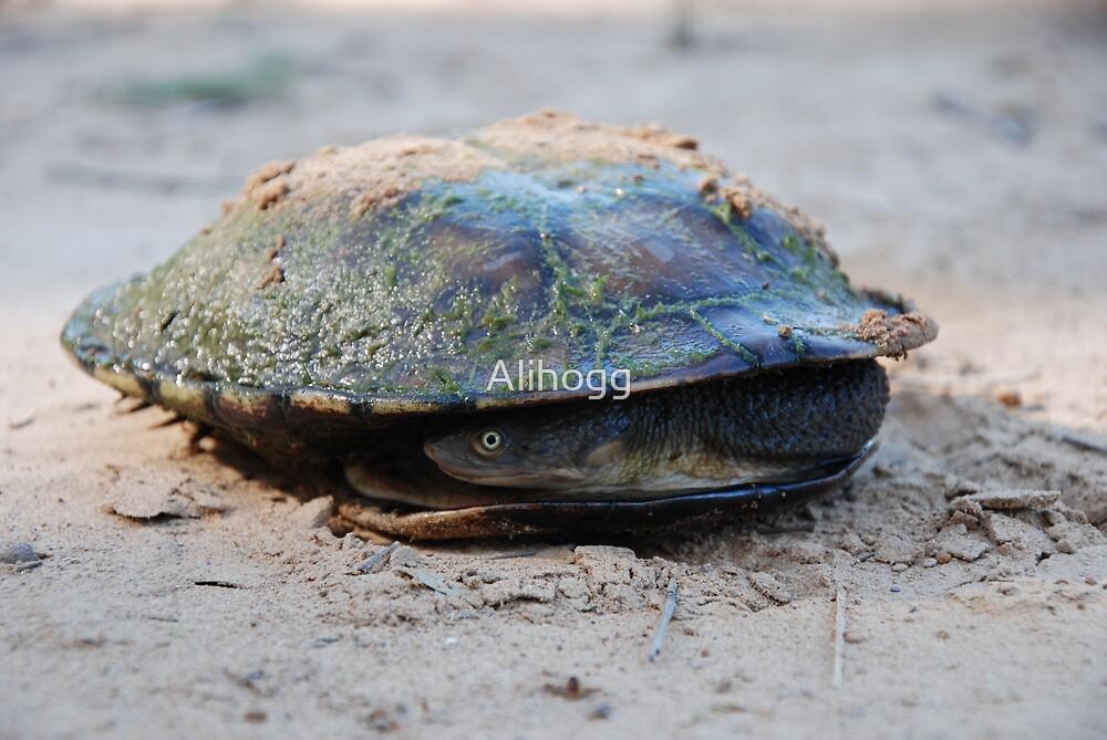 shy turtle by Alihogg