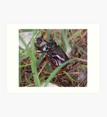 Rhinocerous Beetle Art Print