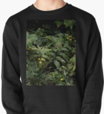 The Green of the Mackinac Island Forest Floor Pullover