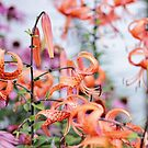 Mackinac Island Tiger Lilies and Echinacea by photolodico
