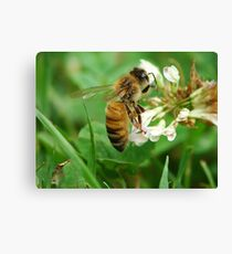 Honey Bee Feast of the Clover Canvas Print