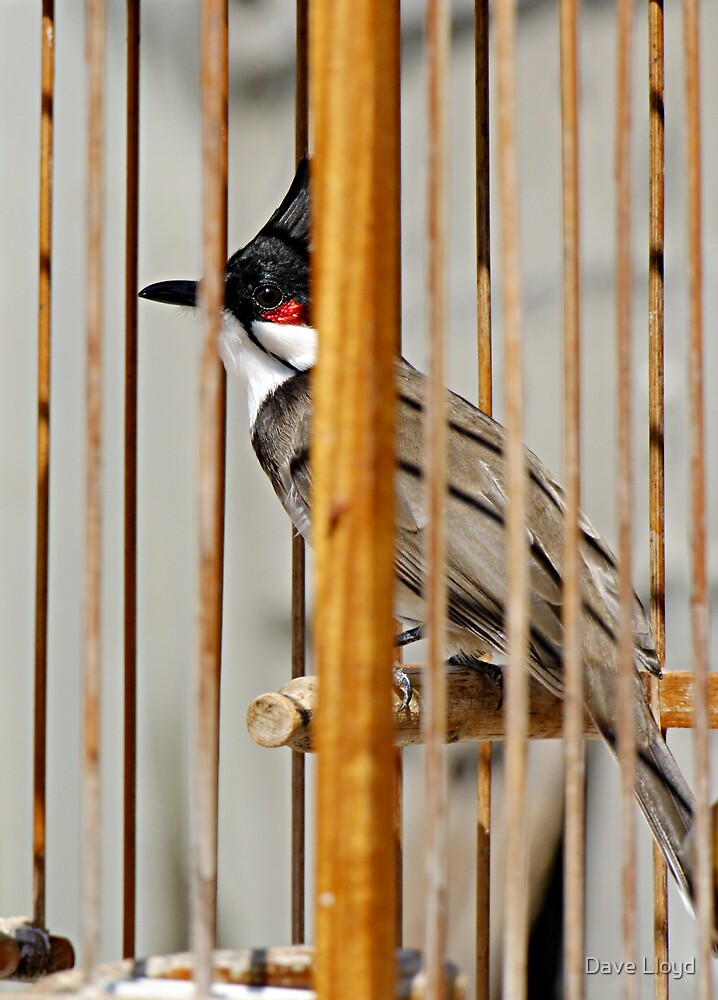 The Bird by Dave Lloyd