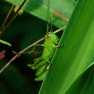 Green Grasshopper by Ron Alcorn