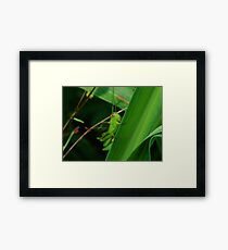 Green Grasshopper Framed Print