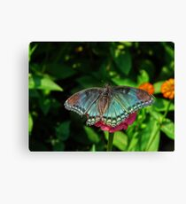 Battle Scarred Butterfly Canvas Print
