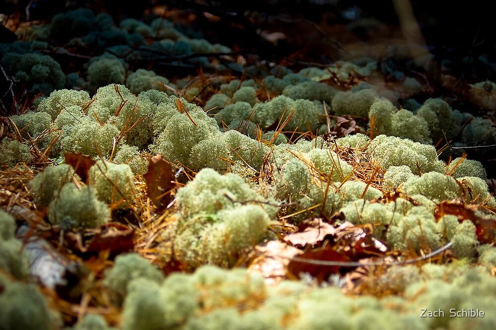 Mossy Moss by Zach  Schible
