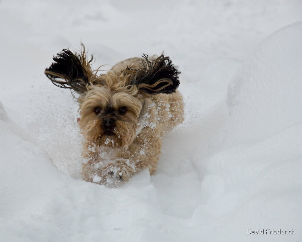 Snow Pup by David Friederich