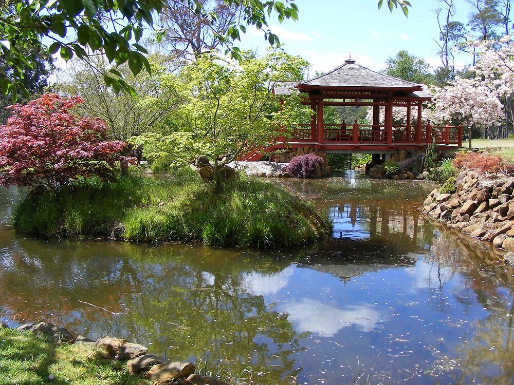Japanese garden at Emu Valley Rhododendron Garden, Burnie by gaylene