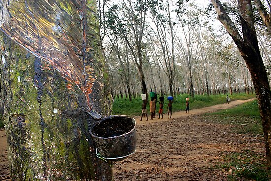 Walking Through the Rubber Forest by Wayne King