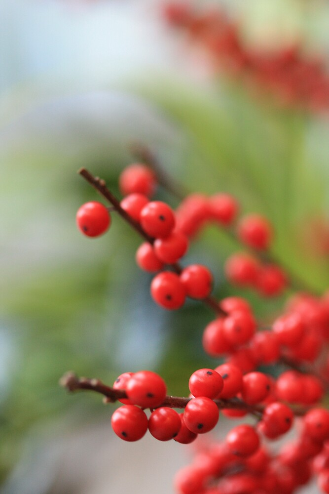 seasonal berries by malina