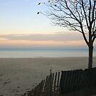 Lake Shore Morning by caryj58