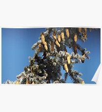 Blue Skies 001 Poster