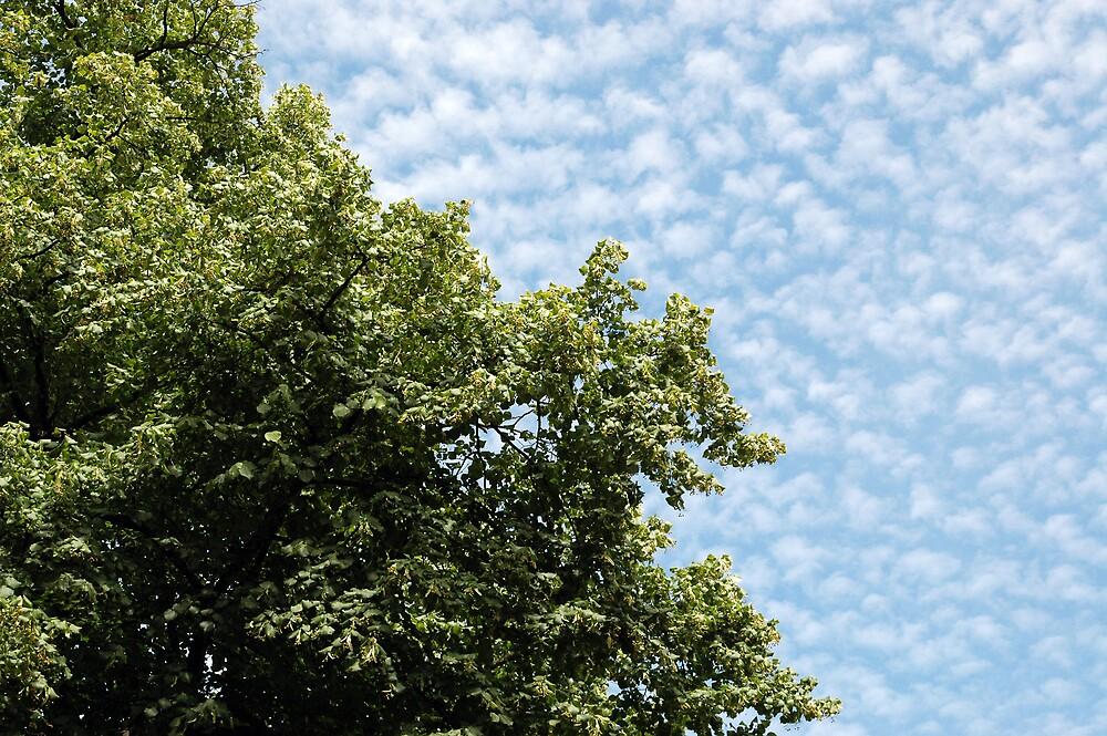 Tree & mottled sky by Andy Matthews