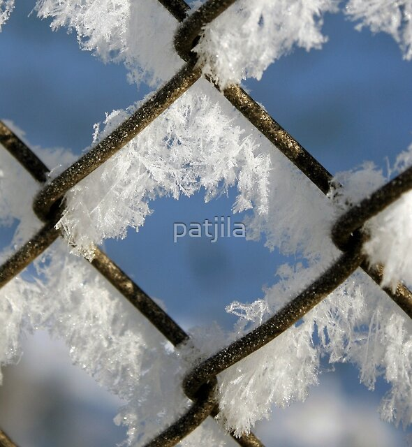 Cold as Ice by patjila