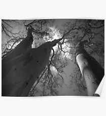Scary Trees- Moores Road Poster