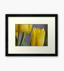 Yellow Tulips 4 Framed Print