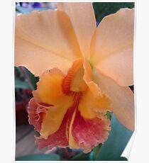 Peachy Perfection - Beautiful Cattleya Poster
