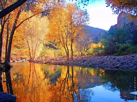 Arizona Winter by Chelsea Brewer