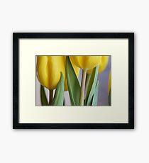Yellow Tulips 3 Framed Print