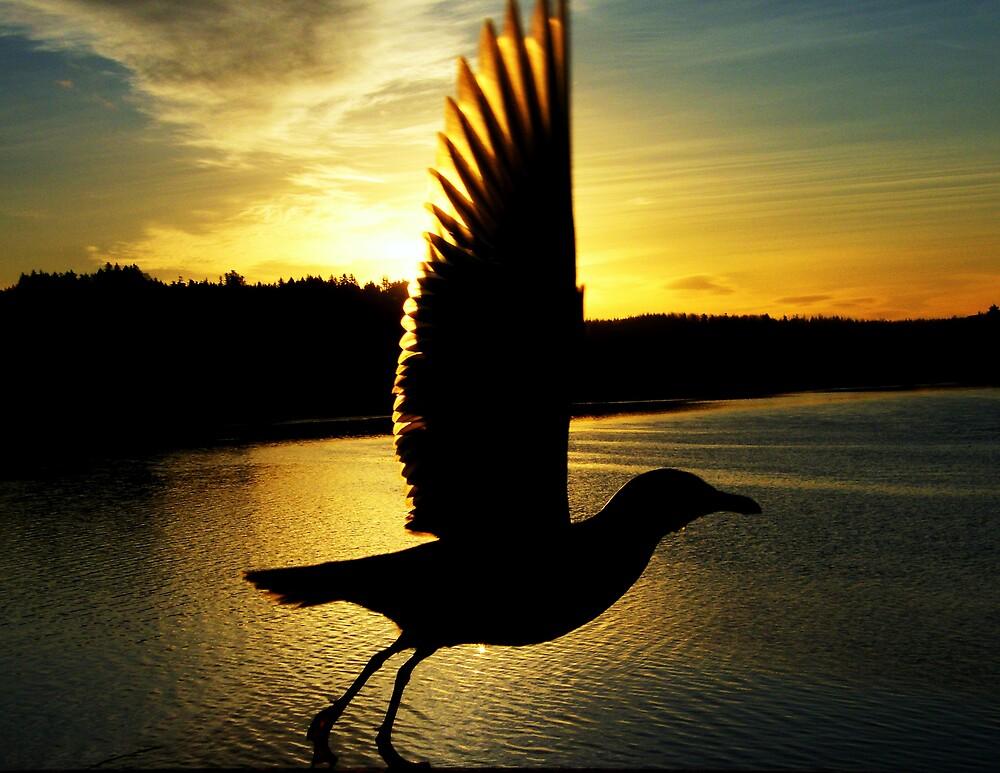 J.L.S. takes wing. by Zeldavision