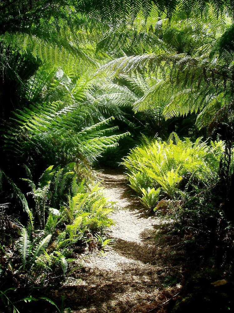 Ferns 2 by chaylastorm