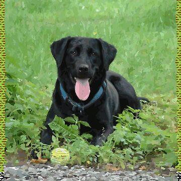 «Loki - Labrador noir» par jaytaylor