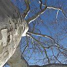 Blue Skies 019 by dge357