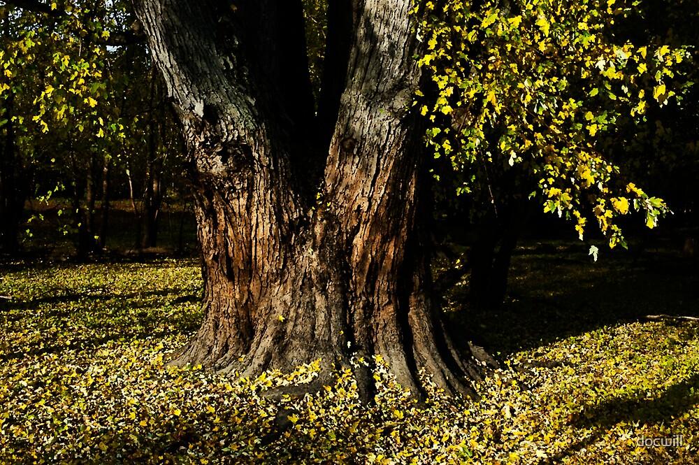 Split Tree by docwill