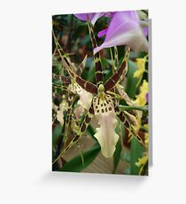 Speckled Bird - Beauty in form and color Greeting Card
