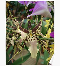 Speckled Bird - Beauty in form and color Poster