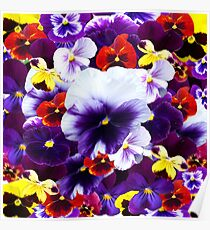 Colour Your World With Pansies, Poster