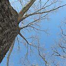 Blue Skies 023 by dge357