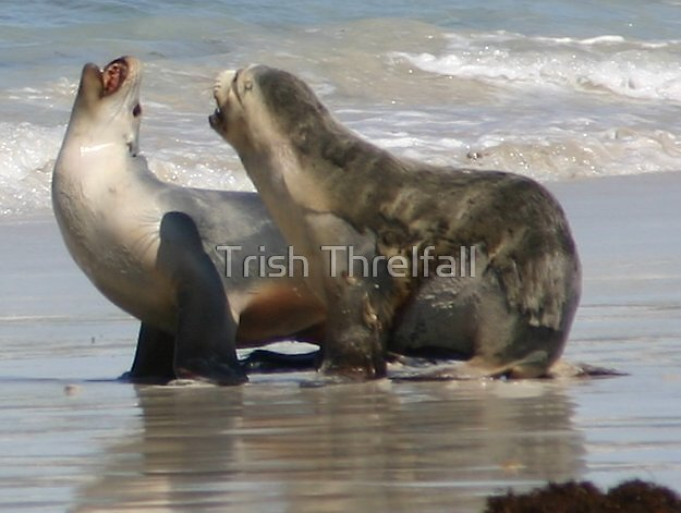 did you hear the one about ? by Trish Threlfall