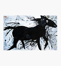 Black Horse 12 Photographic Print