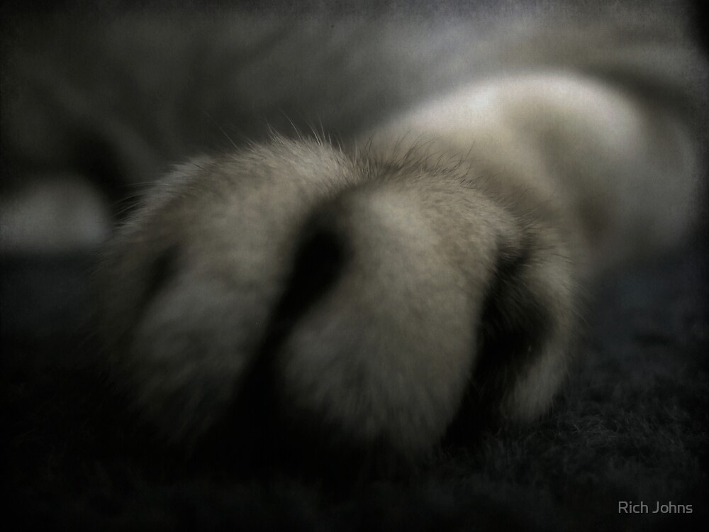 10Ft Paw by Rich Johns