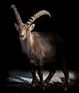 Big Horn (Ibex) by Yannik Hay