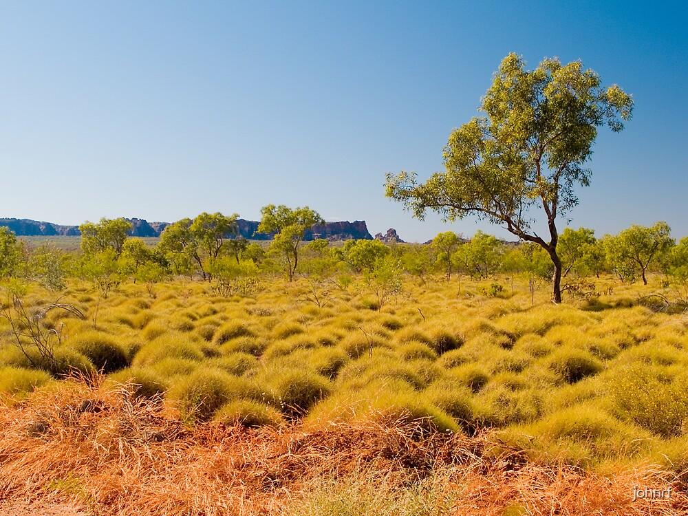 Spinifex Grass,Bungle Bungle Range by johnrf