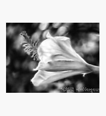 Hibiscus Unfolding BW Photographic Print