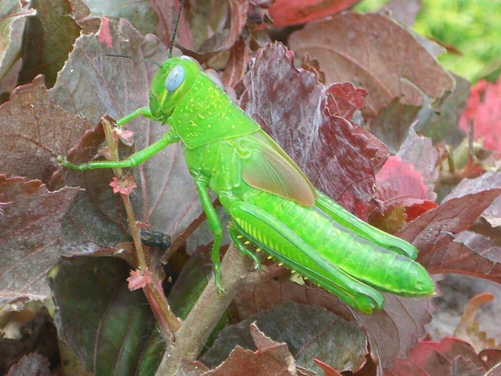 grasshopper by mattnickoll