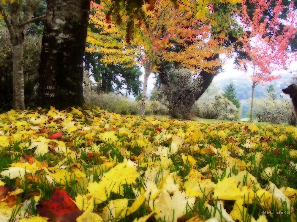 The delight of colored leaves by heechasky