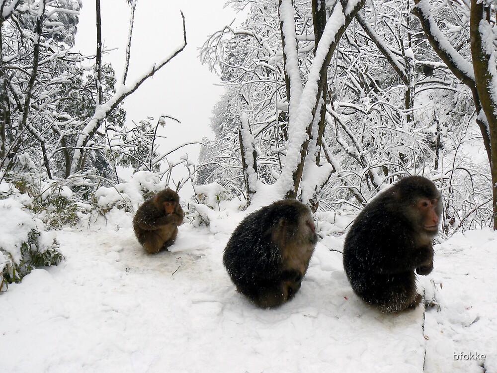 Monkey on Emei Shan, China by bfokke