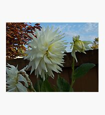 Pure and Natural Climax Photographic Print