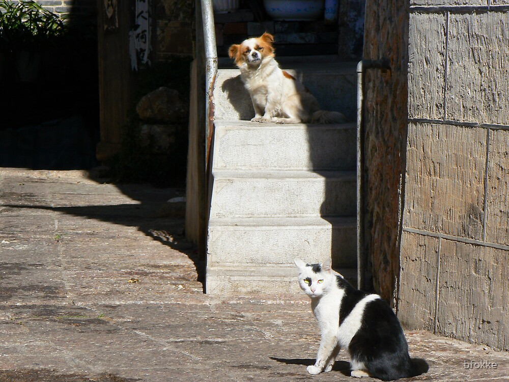 Cat and dog in the sun in Lijiang, China by bfokke