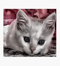 A Kitten Named Raiden Photographic Print